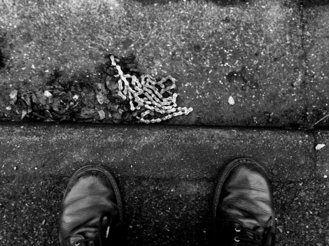 Dead Chain, spotted in the kerbside ice crusted leaves, Guilder Lane, Salisbury